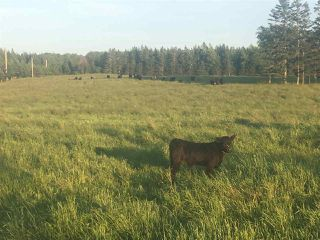 Photo 2: Lot Bennetts Bay Road in Bennett Bay: 404-Kings County Vacant Land for sale (Annapolis Valley)  : MLS®# 201922246