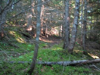 Photo 7: 5049 Ivy Rd: Eagle Bay Land Only for sale (SHuswap)  : MLS®# 10161963