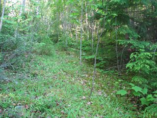 Photo 8: 5049 Ivy Rd: Eagle Bay Land Only for sale (SHuswap)  : MLS®# 10161963