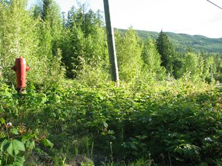 Photo 10: 5049 Ivy Rd: Eagle Bay Land Only for sale (SHuswap)  : MLS®# 10161963