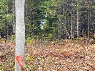 Photo 11: 1405 Highway 7 in Marie Joseph: 303-Guysborough County Vacant Land for sale (Highland Region)  : MLS®# 202010345