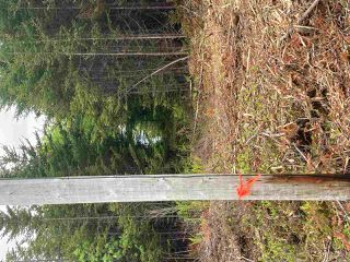 Photo 9: 1405 Highway 7 in Marie Joseph: 303-Guysborough County Vacant Land for sale (Highland Region)  : MLS®# 202010345