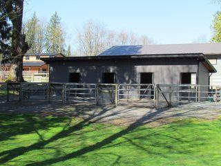 Photo 20: 25170 4 AV in Langley: Otter District House for sale : MLS®# F1441032