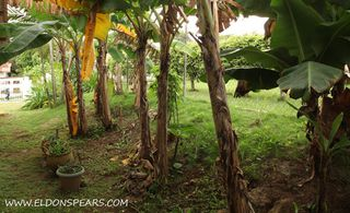 Photo 12:  in La Chorrera: Residential for sale : MLS®# Chorrera house