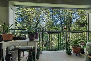Photo 7: 306 12020 207A Street in Maple Ridge: Northwest Maple Ridge Condo for sale : MLS®# R2518444
