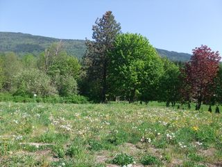 Main Photo: 5441 73 Avenue in Salmon Arm: Land Only for sale : MLS®# 10111492