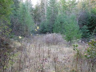 Photo 5: Lot 1 Trans Canada Hwy: Sorrento Land Only for sale (Shuswap)  : MLS®# 10171991