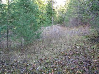 Photo 15: Lot 1 Trans Canada Hwy: Sorrento Land Only for sale (Shuswap)  : MLS®# 10171991