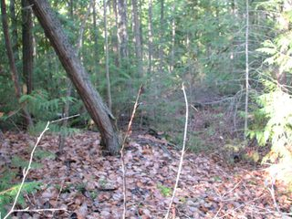 Photo 14: Lot 1 Trans Canada Hwy: Sorrento Land Only for sale (Shuswap)  : MLS®# 10171991