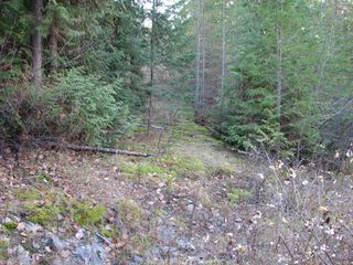 Photo 12: Lot 1 Trans Canada Hwy: Sorrento Land Only for sale (Shuswap)  : MLS®# 10171991