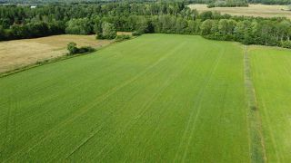 Photo 9: West Branch Road in Welsford: 108-Rural Pictou County Vacant Land for sale (Northern Region)  : MLS®# 202013160