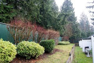 "Photo 11: 33 9088 HOLT Road in Surrey: Queen Mary Park Surrey Townhouse for sale in ""ASHLEY GROVE"" : MLS®# F1301762"