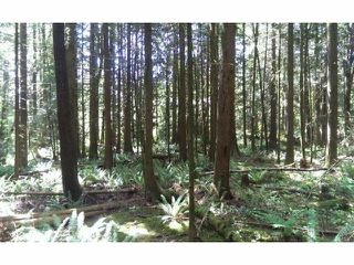 Photo 2: # LT.19 WILSON ST in Mission: Stave Falls Land for sale : MLS®# F1424374