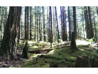 Photo 7: # LT.19 WILSON ST in Mission: Stave Falls Land for sale : MLS®# F1424374