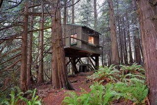 Photo 14: 2408 SUNSHINE COAST Highway: Roberts Creek House for sale (Sunshine Coast)  : MLS®# V993754