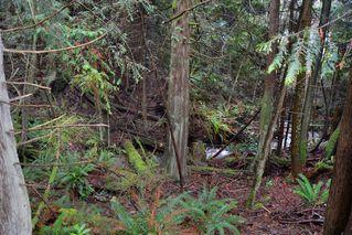 Photo 13: 2408 SUNSHINE COAST Highway: Roberts Creek House for sale (Sunshine Coast)  : MLS®# V993754