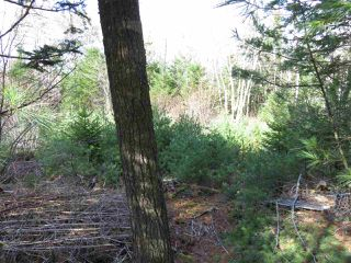 Photo 2: Glasgow Street in Shelburne: 407-Shelburne County Vacant Land for sale (South Shore)  : MLS®# 202100005