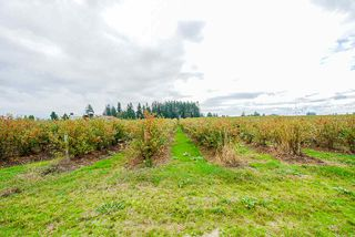 Photo 28: 1939 264 Street in Langley: Otter District House for sale : MLS®# R2507300