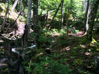 Photo 4: LOT 3 Armstrong Road in Ogilvie: 404-Kings County Vacant Land for sale (Annapolis Valley)  : MLS®# 201924154