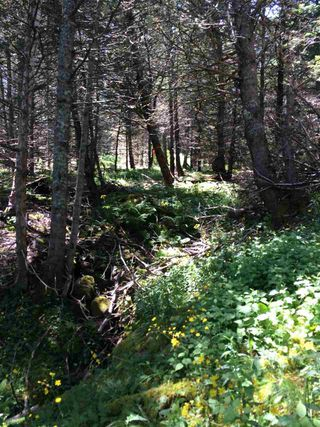 Photo 8: LOT 3 Armstrong Road in Ogilvie: 404-Kings County Vacant Land for sale (Annapolis Valley)  : MLS®# 201924154