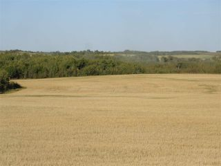 Photo 6: Twp 424 RR 92: Rural Provost M.D. Rural Land/Vacant Lot for sale : MLS®# E4170013