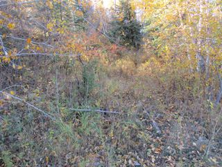Photo 4: Lot 157-159 Third Avenue South in Kenora: Vacant Land for sale : MLS®# TB202564