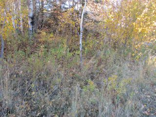 Photo 12: Lot 157-159 Third Avenue South in Kenora: Vacant Land for sale : MLS®# TB202564