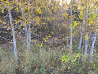 Photo 3: Lot 157-159 Third Avenue South in Kenora: Vacant Land for sale : MLS®# TB202564