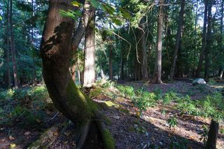 Photo 15: 551 CLUB Crescent: Mayne Island Land for sale (Islands-Van. & Gulf)  : MLS®# R2493632