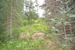 """Photo 29: LOT 1 HISLOP Road in Smithers: Smithers - Rural Land for sale in """"Hislop Road Area"""" (Smithers And Area (Zone 54))  : MLS®# R2491414"""
