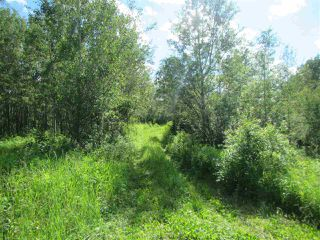 Photo 9: 51111 Range Road 205: Rural Strathcona County Cottage for sale : MLS®# E4205193