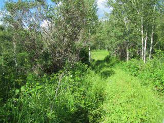 Photo 1: 51111 Range Road 205: Rural Strathcona County Cottage for sale : MLS®# E4205193