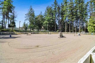 Photo 20: 21113 16 AVENUE in Langley: Agriculture for sale : MLS®# C8033266