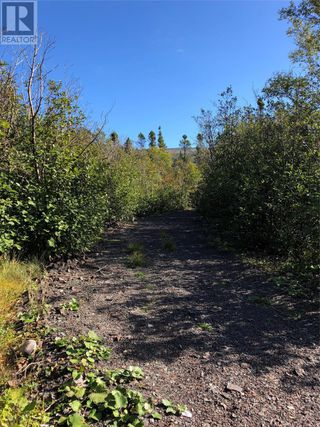 Photo 14: Route 462 Hynes Road in Port au Port East: Vacant Land for sale : MLS®# 1216874