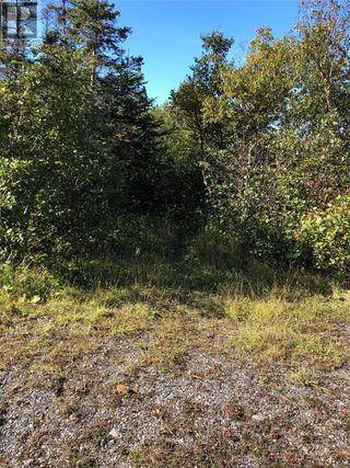 Photo 13: Route 462 Hynes Road in Port au Port East: Vacant Land for sale : MLS®# 1216874