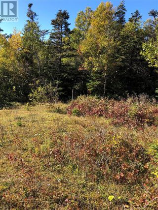 Photo 11: Route 462 Hynes Road in Port au Port East: Vacant Land for sale : MLS®# 1216874