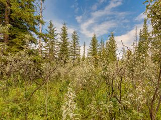 Photo 8: 16-34364 RANGE ROAD 42 in : Rural Mountain View County Land for sale (Mountain View)