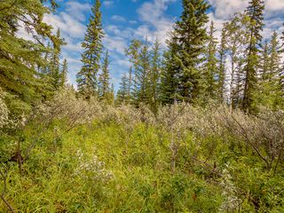 Photo 6: 16-34364 RANGE ROAD 42 in : Rural Mountain View County Land for sale (Mountain View)