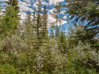 Photo 7: 16-34364 RANGE ROAD 42 in : Rural Mountain View County Land for sale (Mountain View)