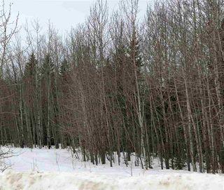 Photo 6: 206 ERICKSON Drive: Rural Sturgeon County Rural Land/Vacant Lot for sale : MLS®# E4188762