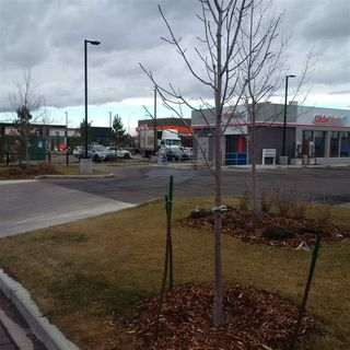 Photo 10: 242 180 MISTATIM Road in Edmonton: Zone 40 Retail for lease : MLS®# E4220047
