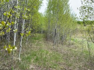 Photo 4: HWY 16A RR 13 SW Section: Rural Parkland County Rural Land/Vacant Lot for sale : MLS®# E4198812