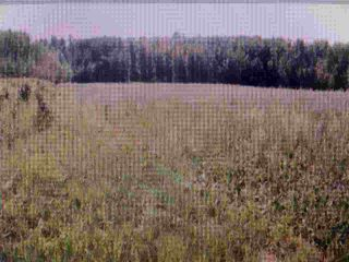 Photo 4: RR 52 Twp. Rd. 485: Rural Brazeau County Rural Land/Vacant Lot for sale : MLS®# E4186124