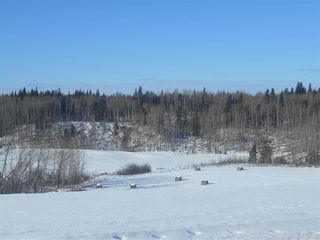 Photo 7: RR 52 Twp. Rd. 485: Rural Brazeau County Rural Land/Vacant Lot for sale : MLS®# E4186124
