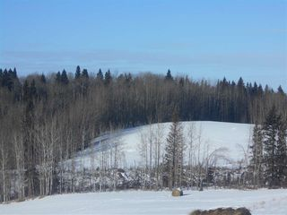Photo 9: RR 52 Twp. Rd. 485: Rural Brazeau County Rural Land/Vacant Lot for sale : MLS®# E4186124