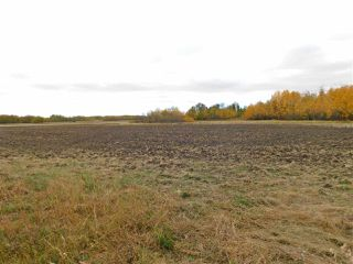 Photo 5: RR240 betw Twp 580 & 582 (north 1/2): Rural Sturgeon County Rural Land/Vacant Lot for sale : MLS®# E4216486