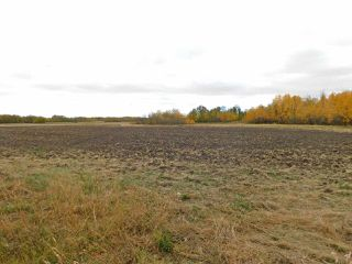 Photo 4: RR240 betw Twp 580 & 582 (north 1/2): Rural Sturgeon County Rural Land/Vacant Lot for sale : MLS®# E4216486