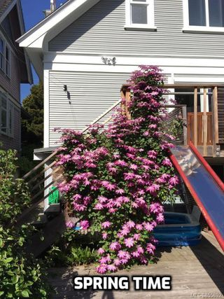 Photo 55: 319 Vancouver St in : Vi Fairfield West House for sale (Victoria)  : MLS®# 855892