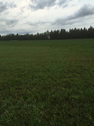 Photo 4: RR 13 Twp 500: Rural Leduc County Rural Land/Vacant Lot for sale : MLS®# E4206440