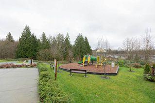 "Photo 36: 27 11252 COTTONWOOD Drive in Maple Ridge: Cottonwood MR Townhouse for sale in ""COTTONWOOD RIDGE"" : MLS®# R2524381"